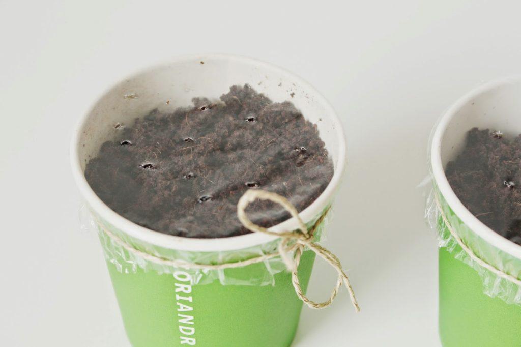 Kräutersamen einpflanzen