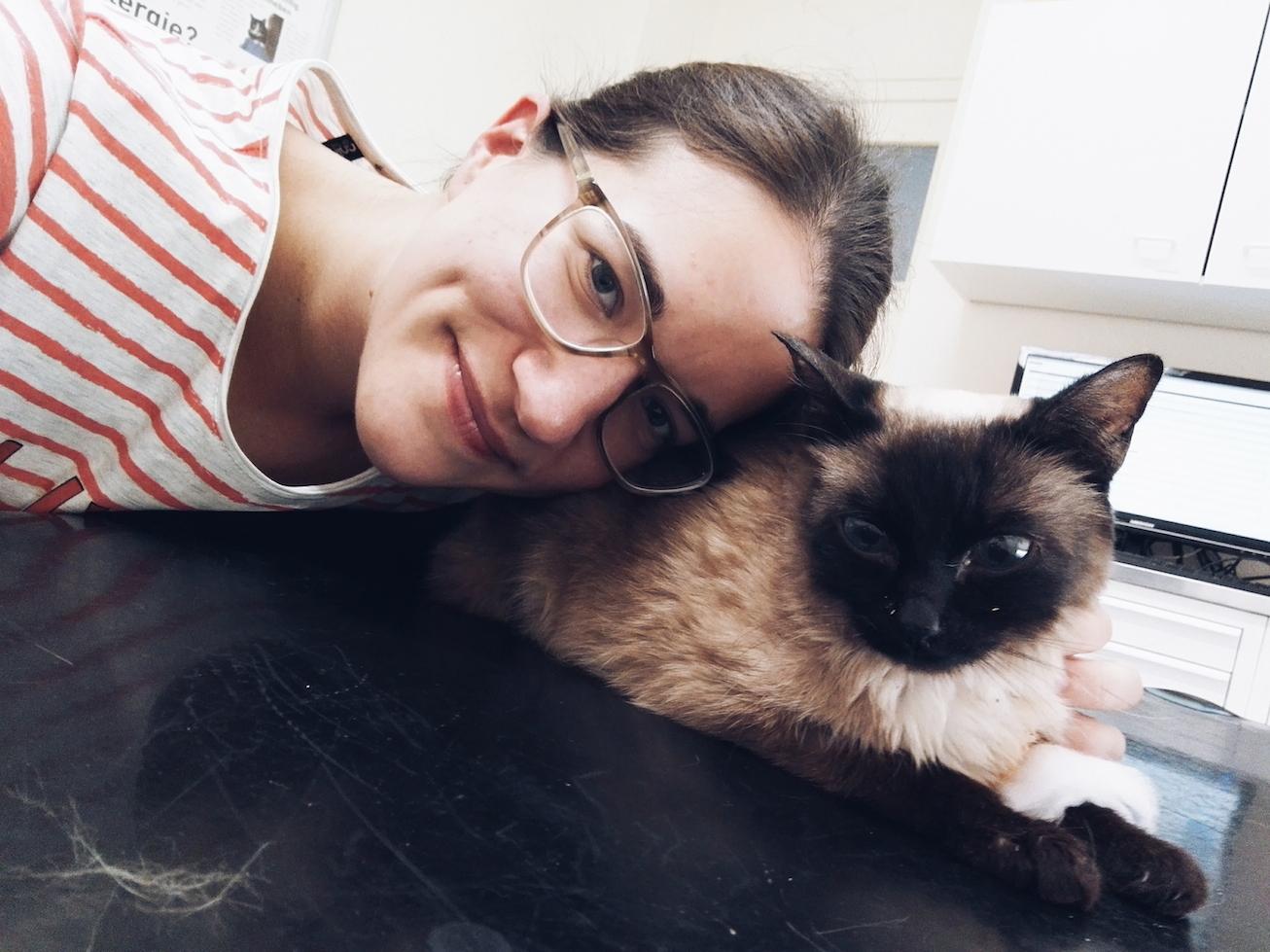 Siamkatze, Kranke Katze, Tierarzt