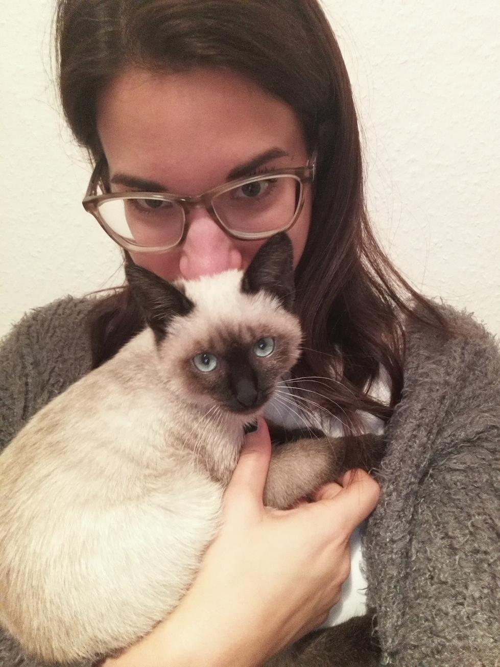 Neues Haustier mit kleinen Kindern Babykatze