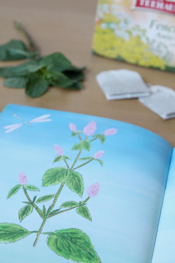 Heilkräuter Natur für Kinder Kinderbuch Elfenapotheke Pfefferminz Tee