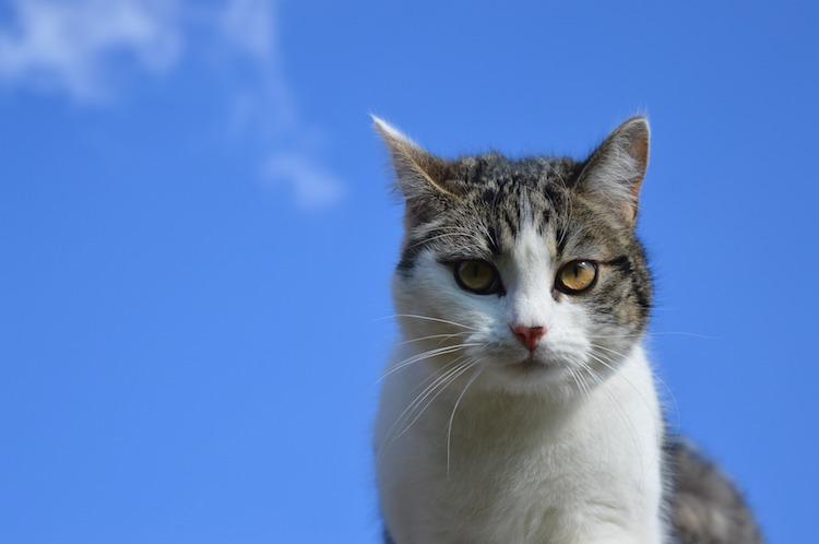 Mit Kindern über den Tod sprechen Haustier Katze